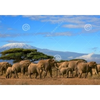 Tuindoek africa olifant (1030) 60 cm x 40 cm