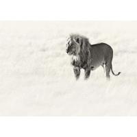 Tuindoek Leeuw zwart/wit (1100)
