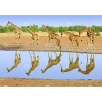 Tuindoek giraffe (1030)