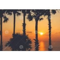 Tuindoek palmbomen sunset  (1120)    50 cm x 70 cm
